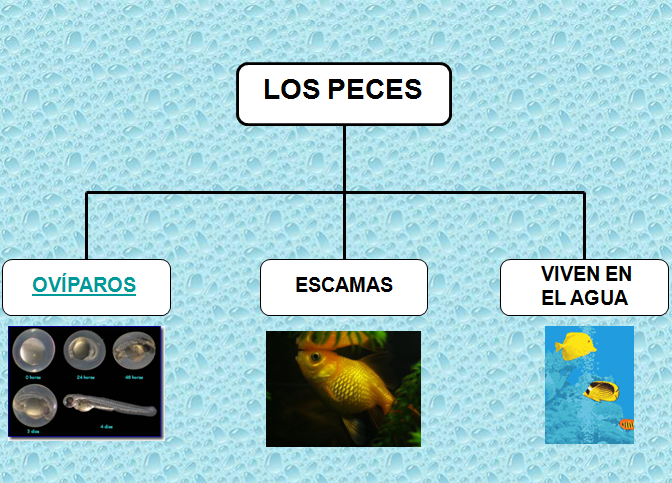 animales | Blog de 1º de E.P. Colegio Vedruna (Pamplona)